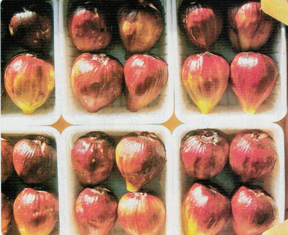 HB-101で実が大きく、糖度が高く、食味が最高になります。