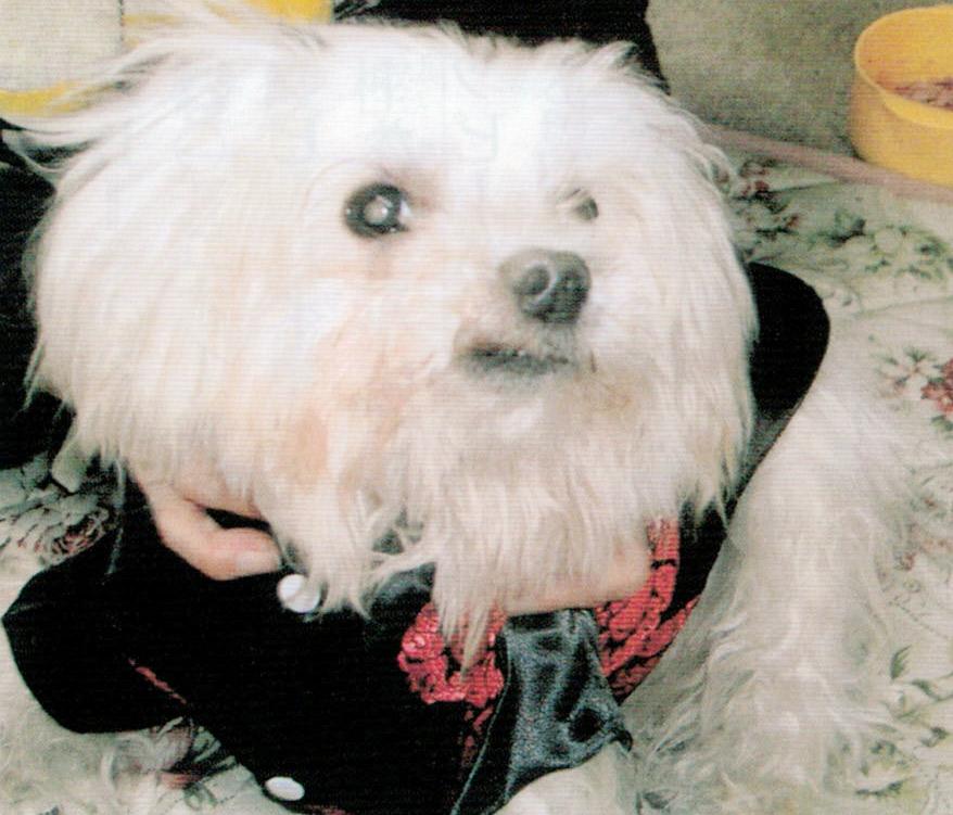 目が悪かった老犬なのに、HB-101のおかげで犬の目が澄みきってきました。
