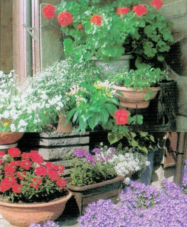 HB-101でゼラニュームなどすべての花が綺麗に咲きます。