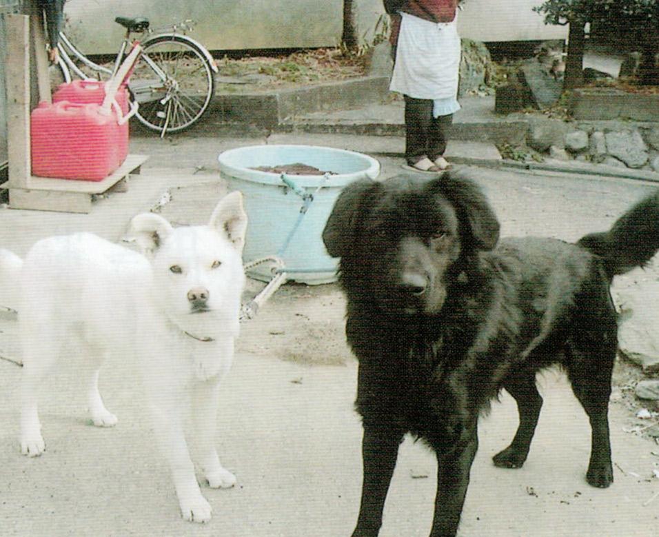 HB-101とニャンケンポンで犬はとても健康です。