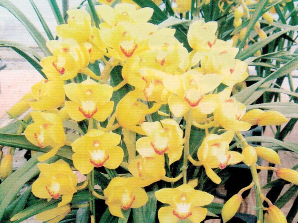 HB-101で花の色艶が良く、花の日持ちが良く、芳香性が良く、茎が太くなります。