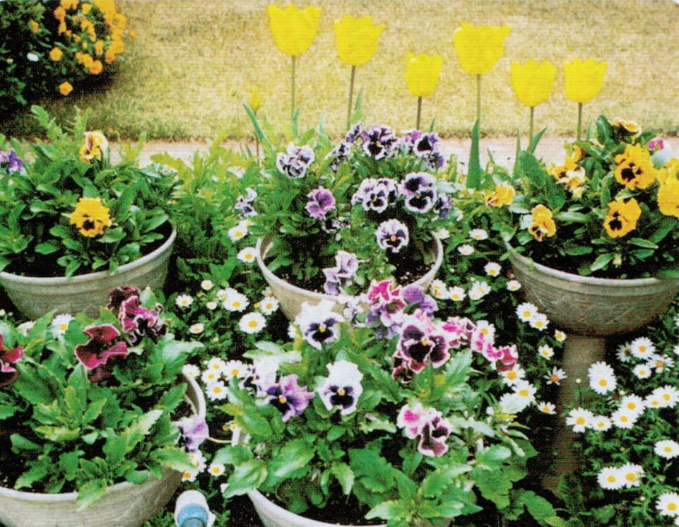 鉢植えの花もHB-101で葉も茎も活き活きとしており、花持ちが良いです。