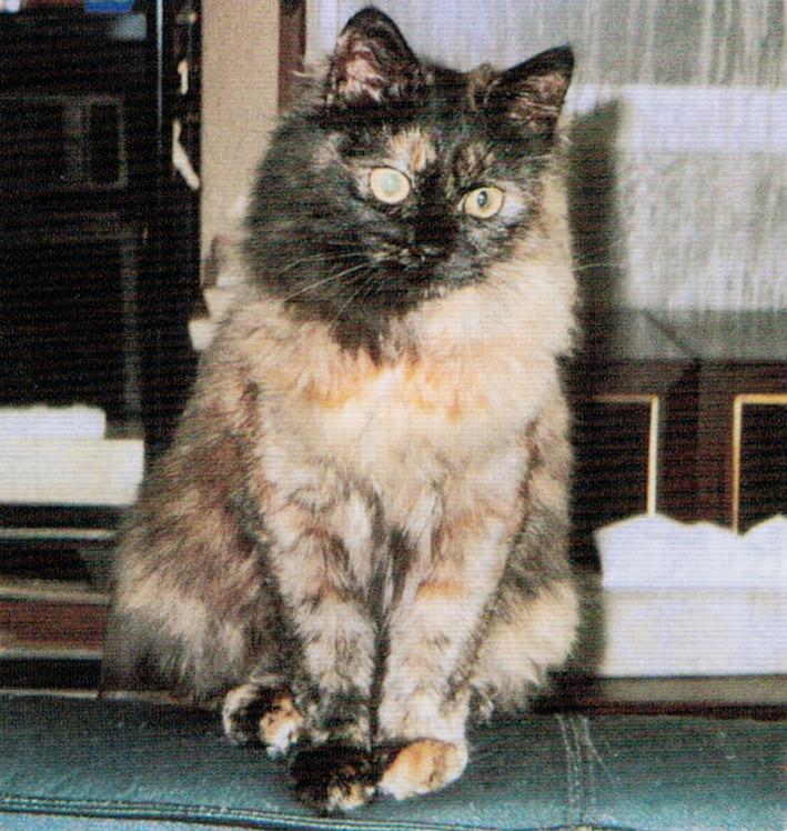 HB-101を飲んで元気に育ち、毛に艶が出て、フサフサになってきた猫です。