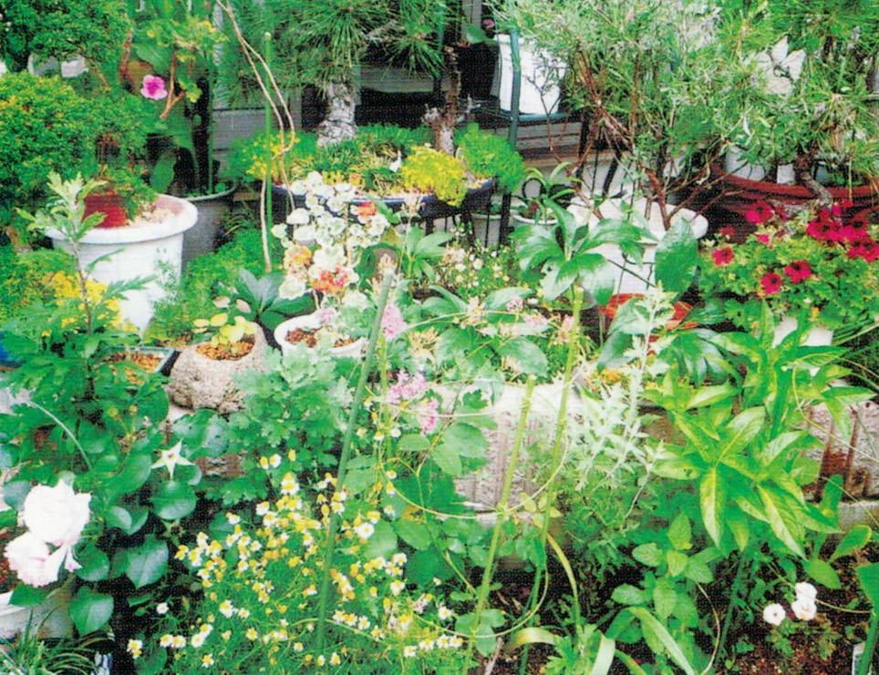 HB-101で庭の盆栽や草花が色艶良く咲き誇り、毎日の手入れが楽しみです。
