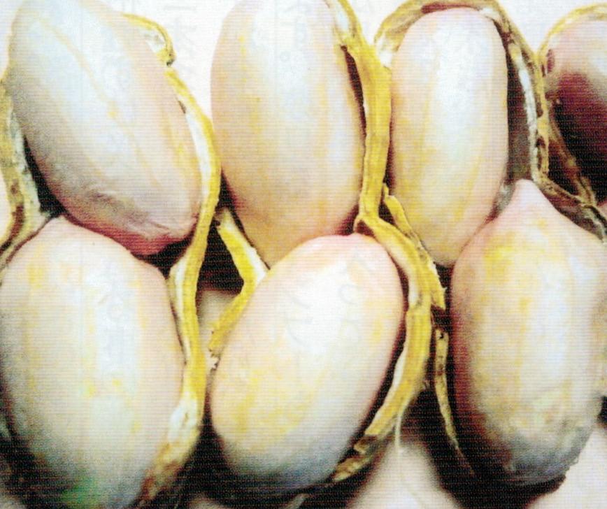 HB-101と顆粒HB-101で病気、害虫に侵されず、皮も綺麗で食味、香りが良いです。