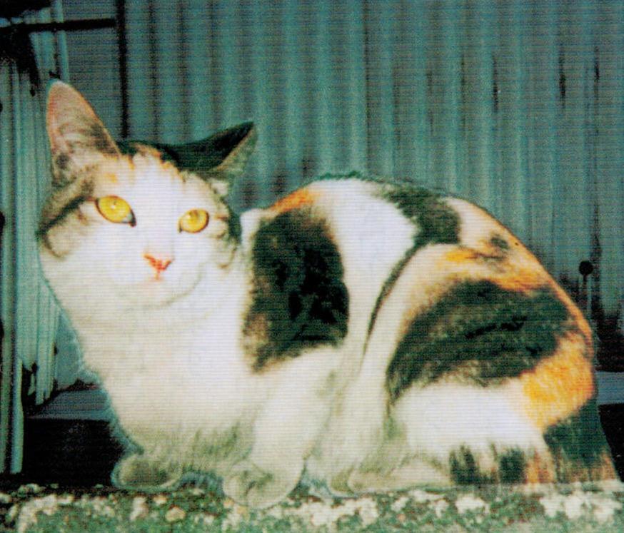 猫エイズのメリーがHB-101のおかげで毛並みが良く、元気になりました。