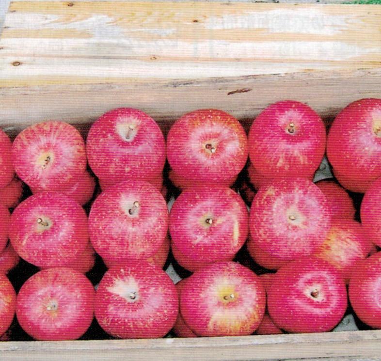 HB-101で栽培したリンゴを食べたお客様より、食感が良く、とても甘くておいしいと評判です。