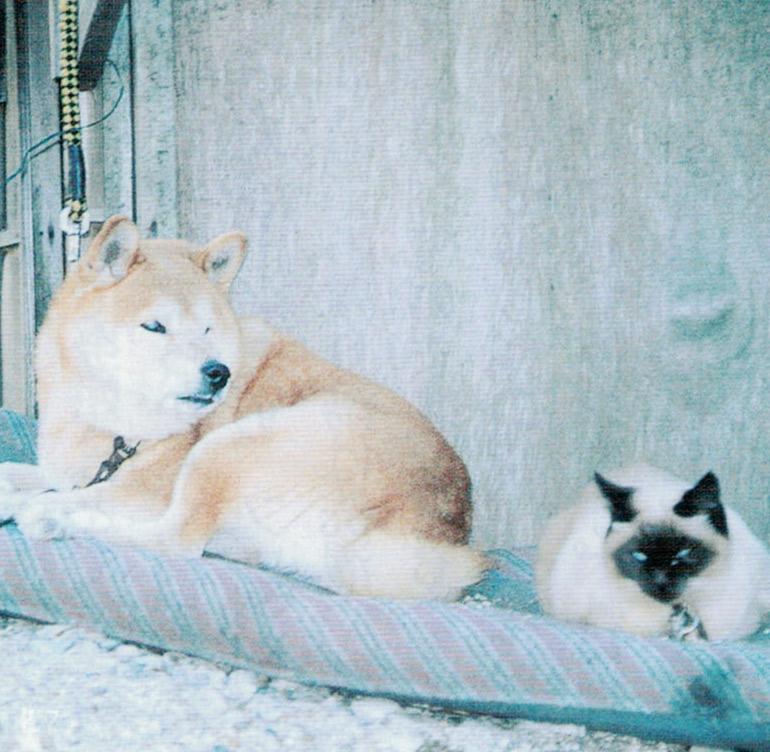 HB-101で犬も猫もとても元気です。