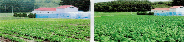 発芽したばかりのビート苗が暴風で飛ばされ、再播種したにもかかわらず、HB-101のおかげで多少の減収で済み、大満足です。