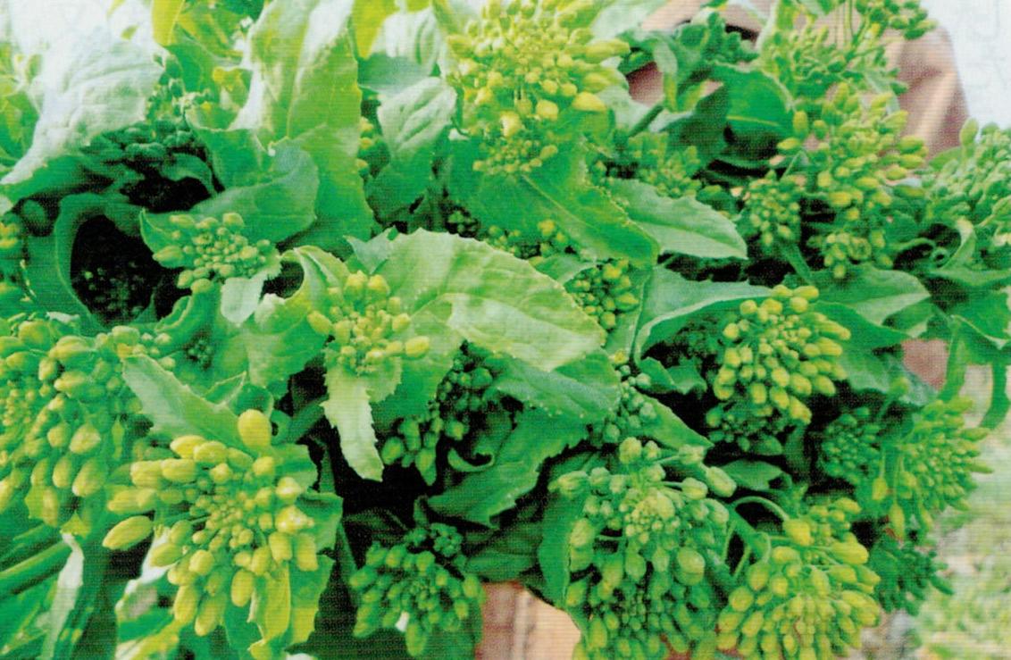 HB-101を与え続けた田んぼで作ったナバナは、濃い緑色の葉は香りが高く、しっかりしているのにとても柔らかく、本当においしいです。