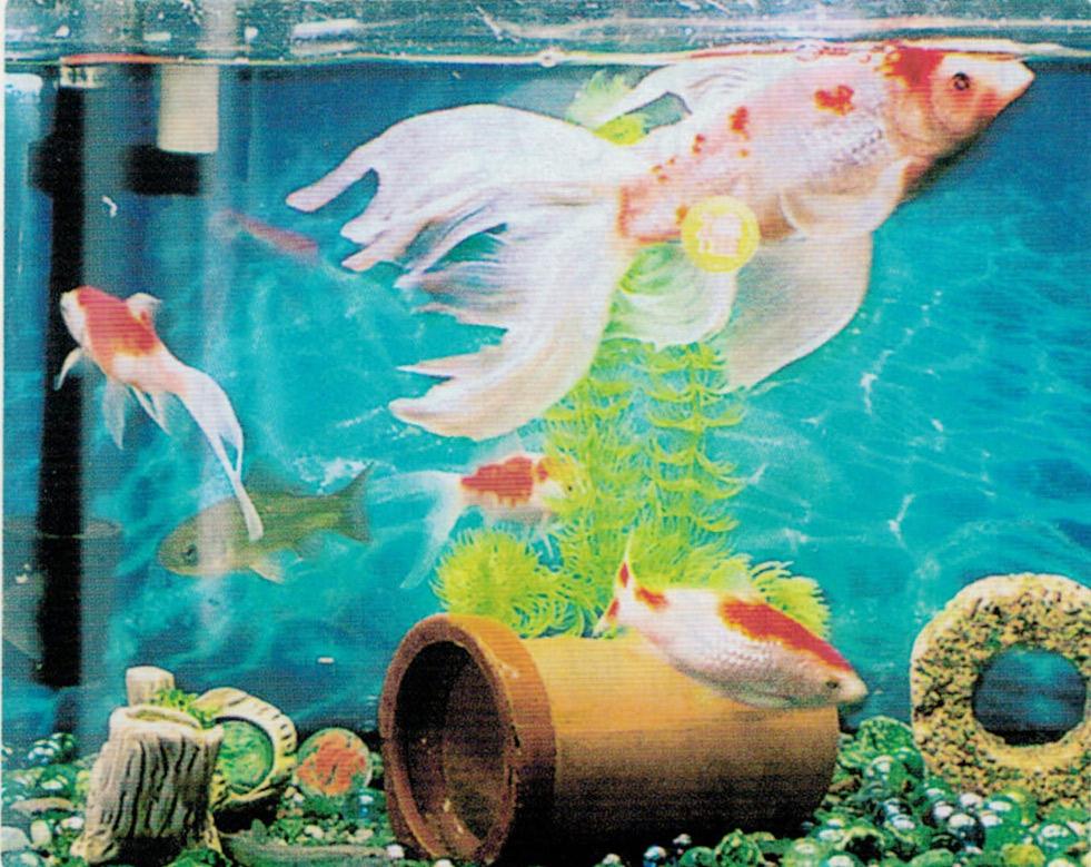 HB-101のおかげで金魚がとても元気です。