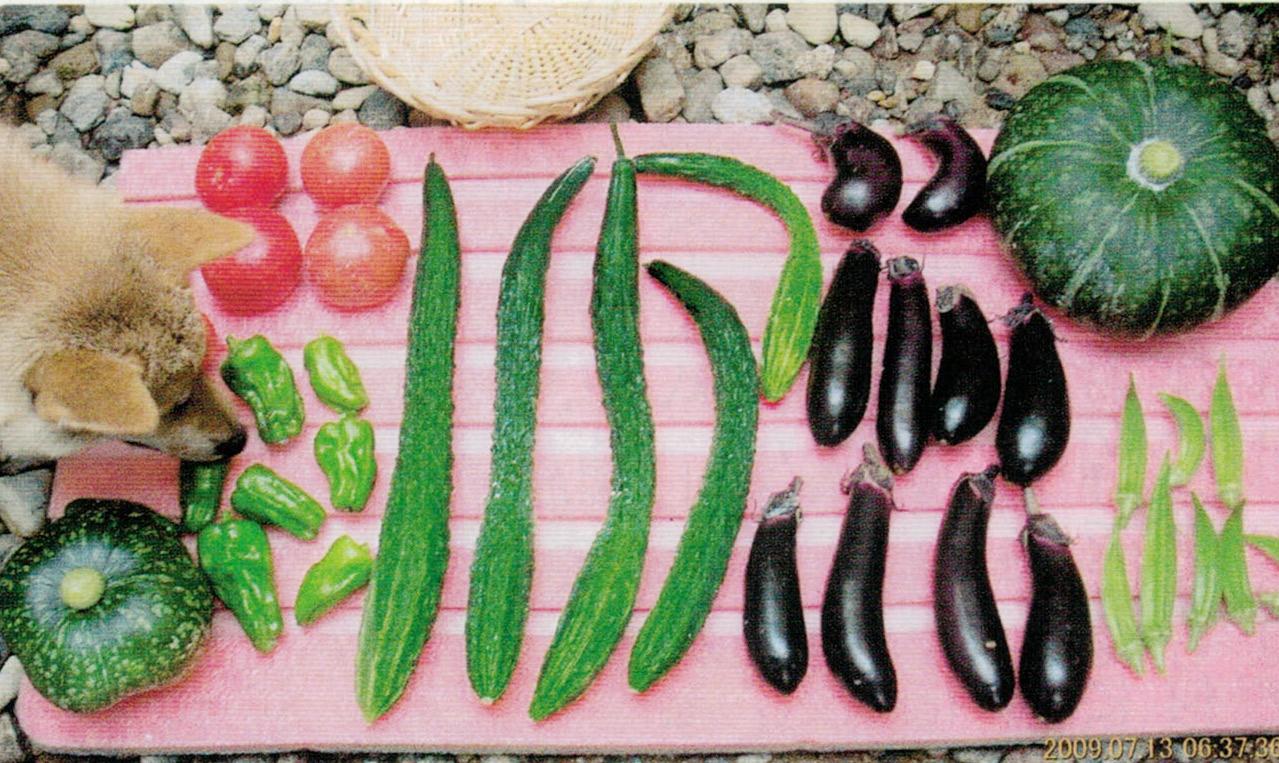HB-101で安全でおいしい野菜が収穫出来、狭い菜園でも連作出来る事が一番有難いです。
