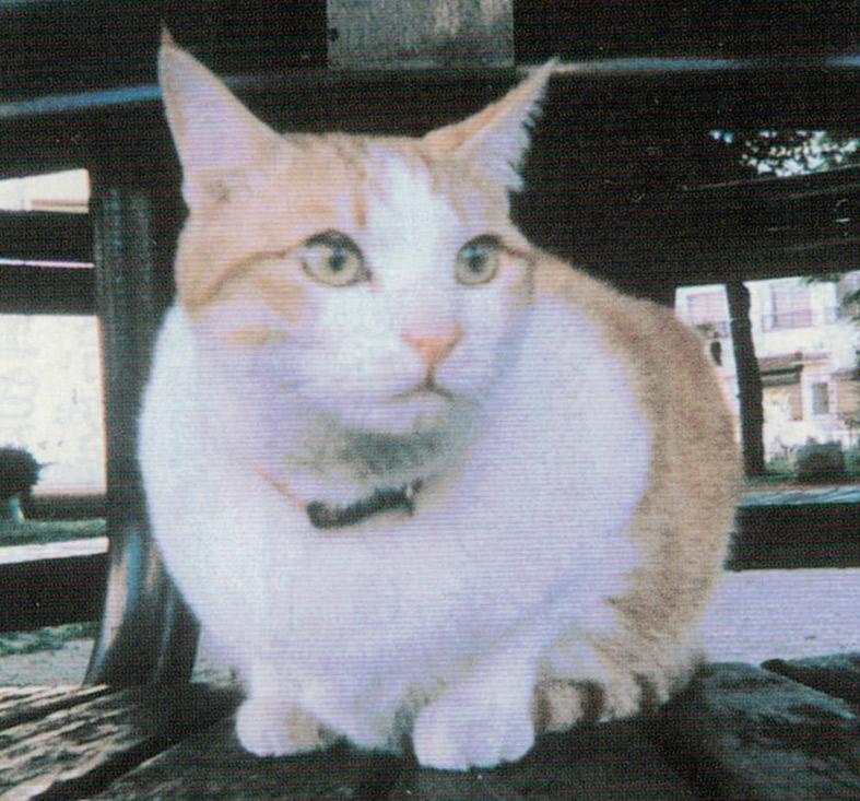 HB-101で毎日、元気に鬼ごっこを楽しんでいる猫です。