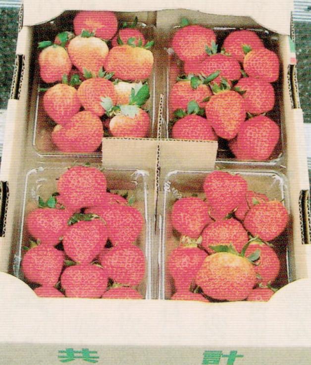 HB-101のおかげで色艶、形、香りが良く、甘味と酸味のバランスが良いイチゴです。