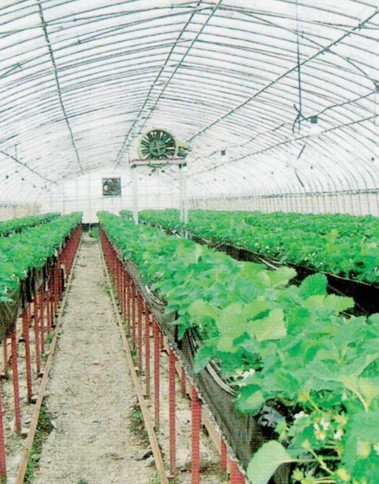 HB-101を使うと、根張りが良く、しっかりとした固い苗が出来、活着が良く、後の作業管理が楽になります。