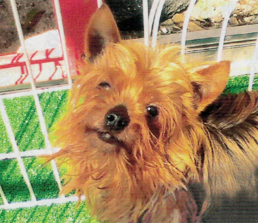 愛犬の飲み水にHB-101を入れて飲ませています。おかげで犬は病気知らずです。