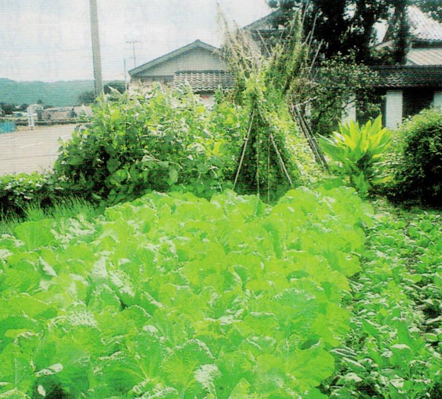 HB-101で畑の野菜が元気に成長します。