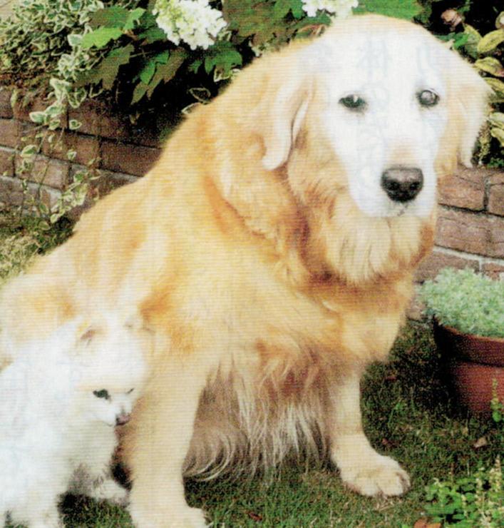 我が家の2匹の犬は、HB-101とニャンケンポンで元気に過ごしています。