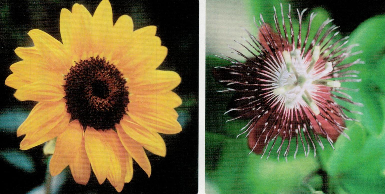 HB-101で咲いた花の写真をハガキにしてお便りすると、皆様に褒められます。