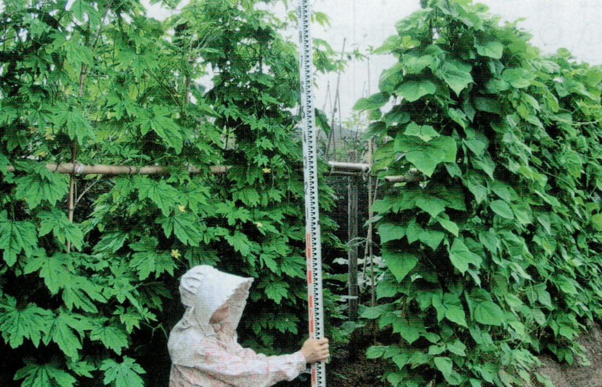 HB-101と顆粒HB-101を使うと、生長がとても良いです。