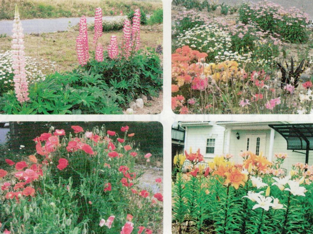 HB-101で花の色が鮮やかになります。