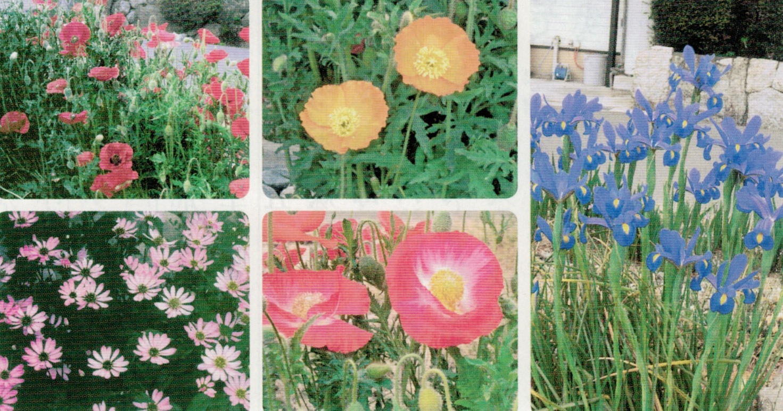 HB-101で花の咲いている期間が長くなります。