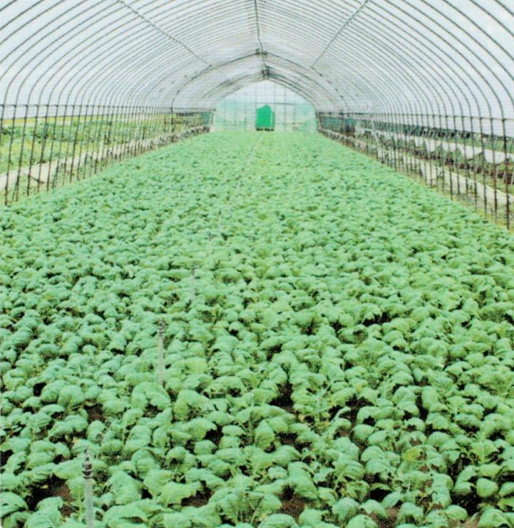 HB-101で病気や環境(悪天候)に影響されず、栽培が可能になる事が分かりました。