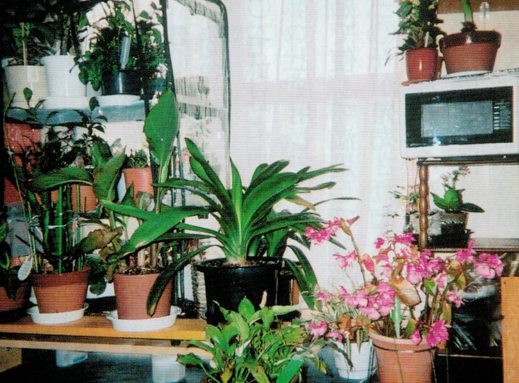 HB-101で植物が美しく、元気で鮮やかに咲いてくれます。