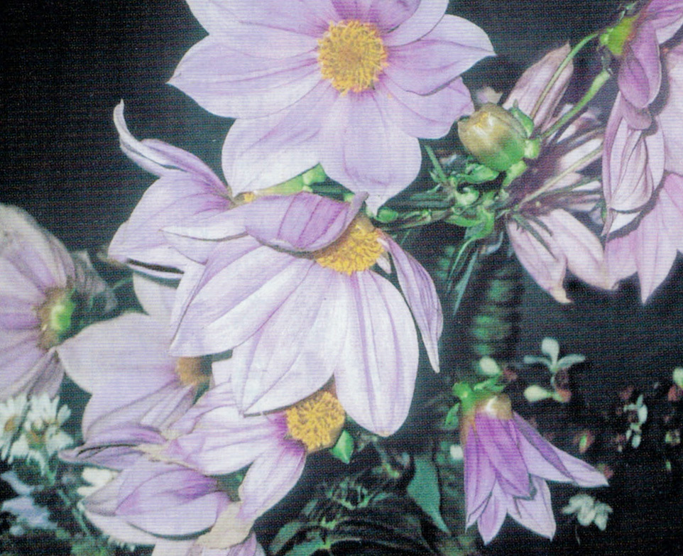 HB-101のおかげで美しい花が30個以上も咲きました。