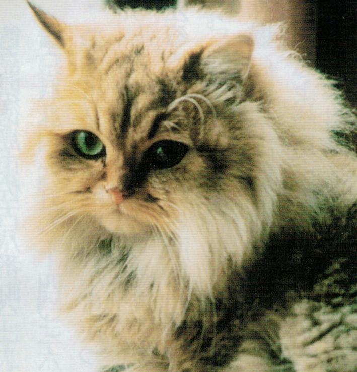 HB-101で、猫のウランは病気知らずで元気です。