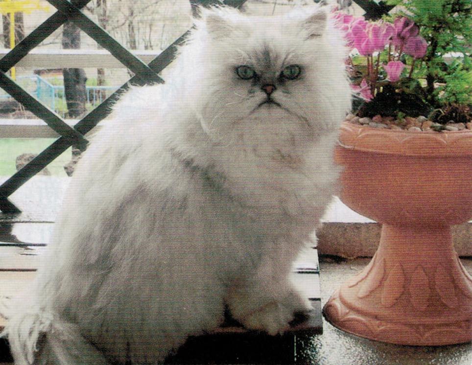 HB-101で猫のペルちゃんも健康で長生きしてもらいたいです。