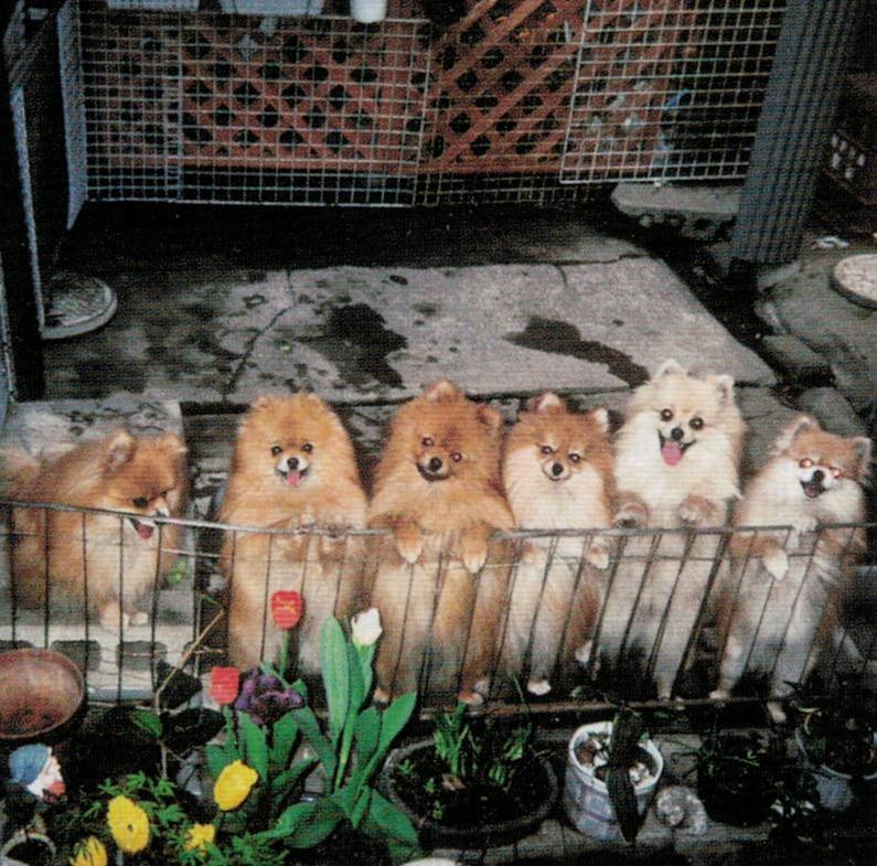 ニオイノンノは安全で、愛犬の健康に欠かす事が出来ません。