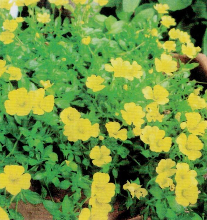 HB-101で葉の緑が濃く、細い茎も丈夫に育ちます。