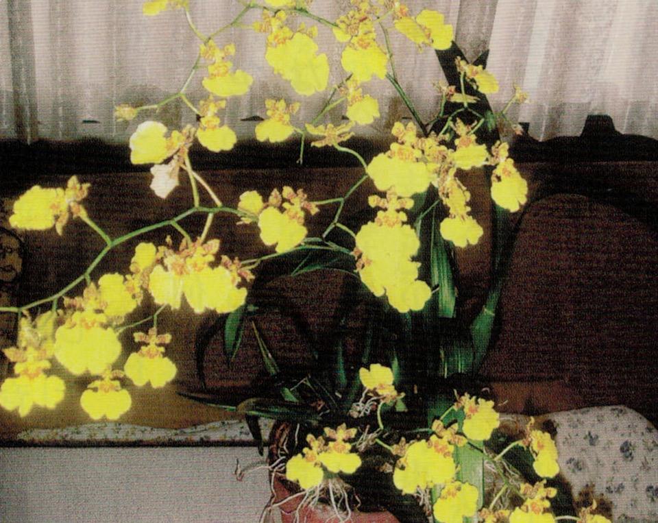 HB-101で立派な花が咲きます。
