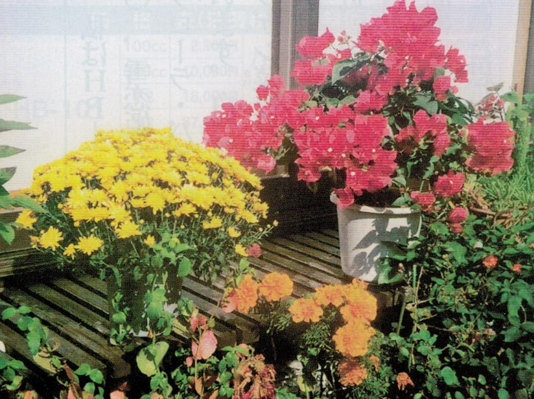 HB-101で花が綺麗です。