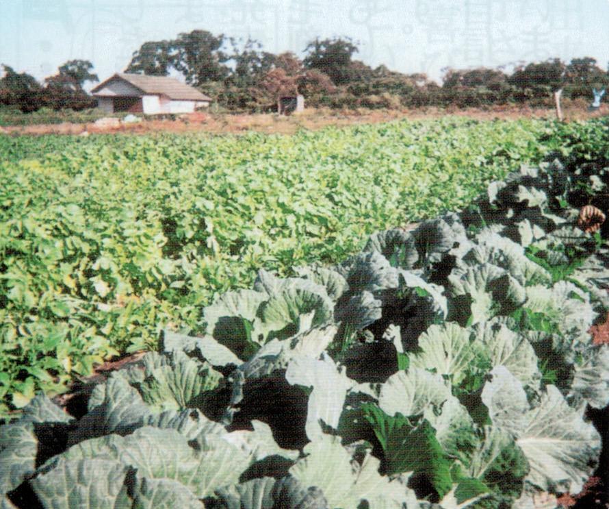 HB-101のおかげで、天候が悪くてもたくさんの収穫が出来ました。
