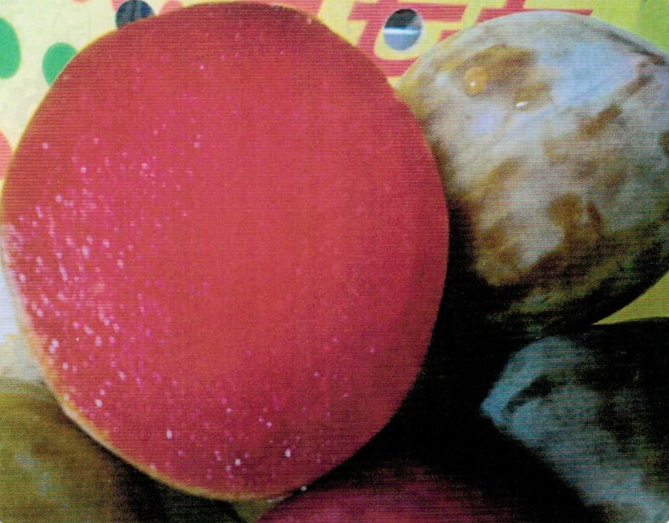 HB-101で育ったスモモは、果汁がジューシーで甘くておいしいと大好評です。