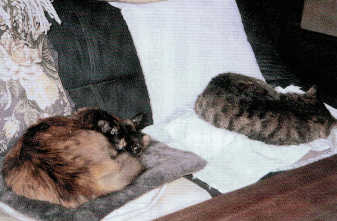 HB-101の飲み水で、左の奈々ちゃんと右のノラ猫の毛が艶々で綺麗です。