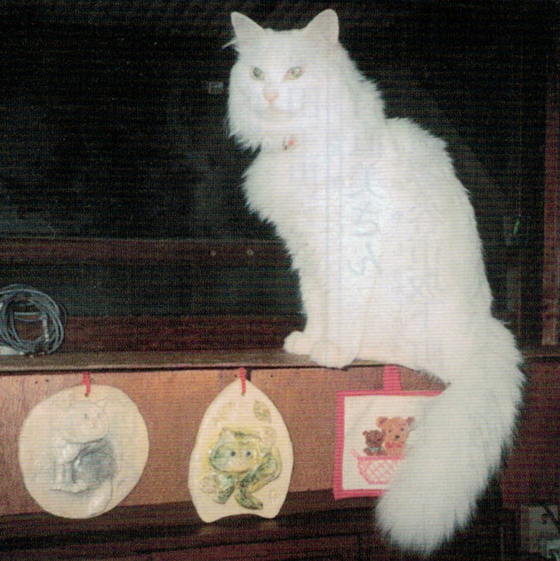 HB-101の飲み水を飲む19歳の猫です。