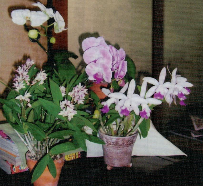 HB-101で例年にないほど、たくさんの花が咲きました。