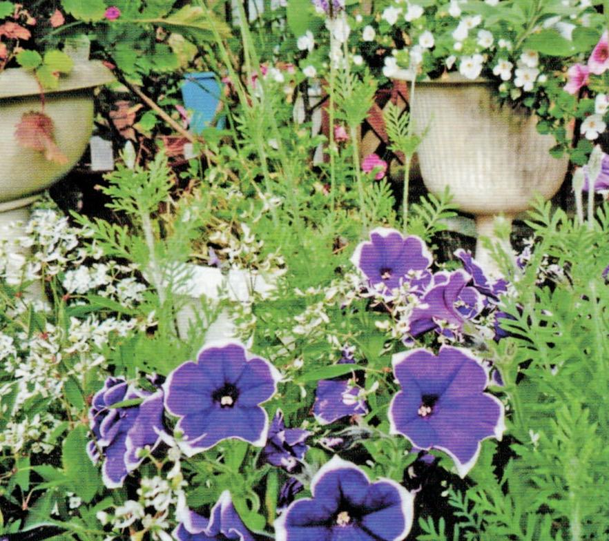 HB-101と顆粒HB-101で、色鮮やかに咲きます。