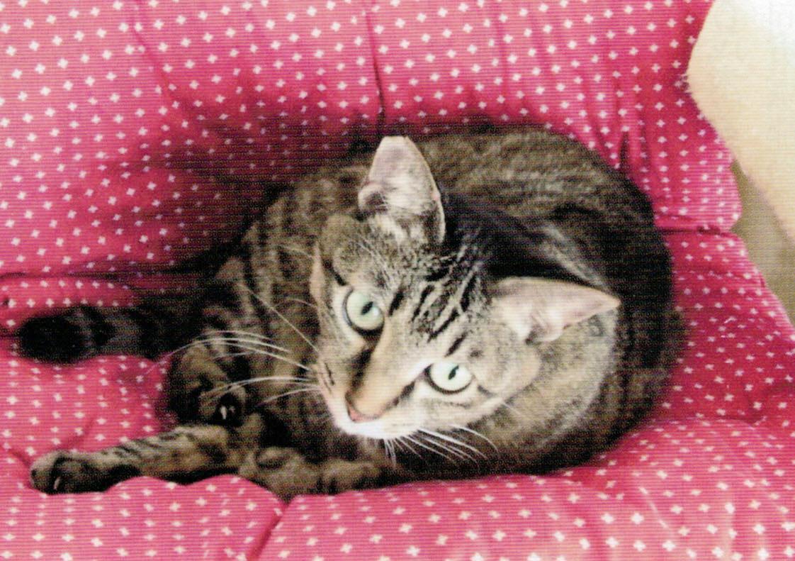 猫の花子は、HB-101で元気です。
