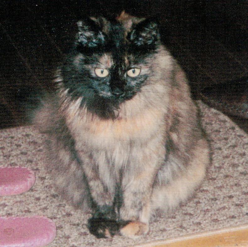 HB-101で猫の毛がツヤツヤで綺麗です。