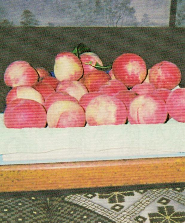 HB-101で甘い甘い桃が収穫出来ました。