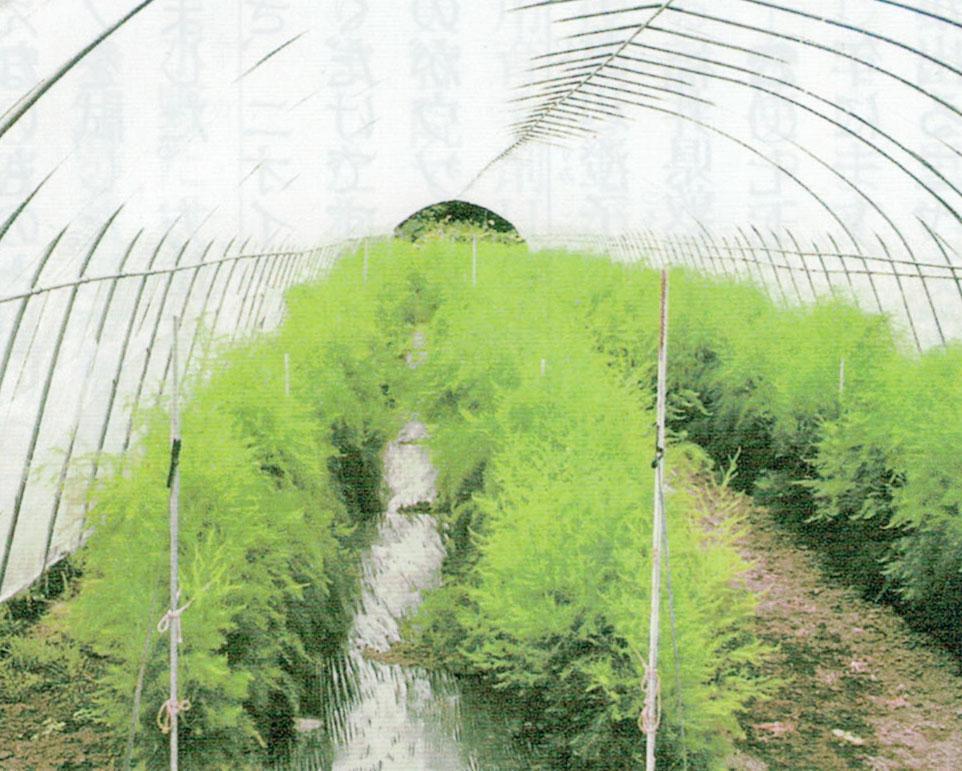 HB-101と顆粒HB-101で土壌が活性化されます。
