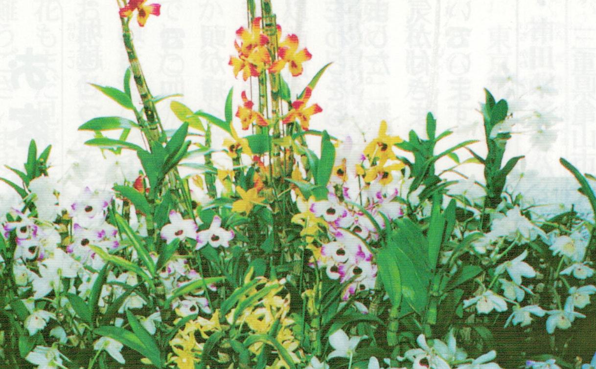 HB-101を25年間使っています。HB-101で植物がとても綺麗になります。