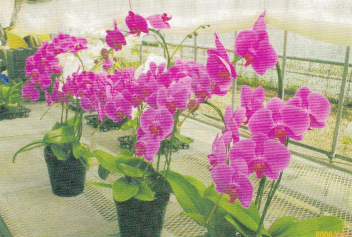 HB-101で見事な花の色が出ています。