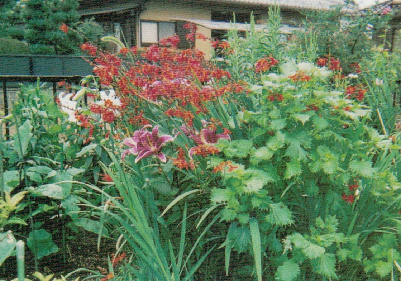 HB-101で花が元気になります。