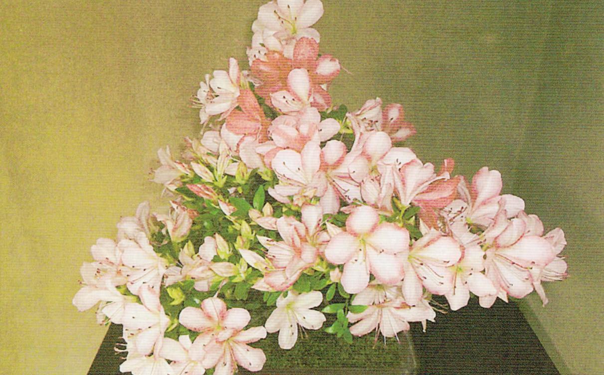 HB-101で見事に咲き、此れ以上花の着く余地のない位見事な花を着けています。