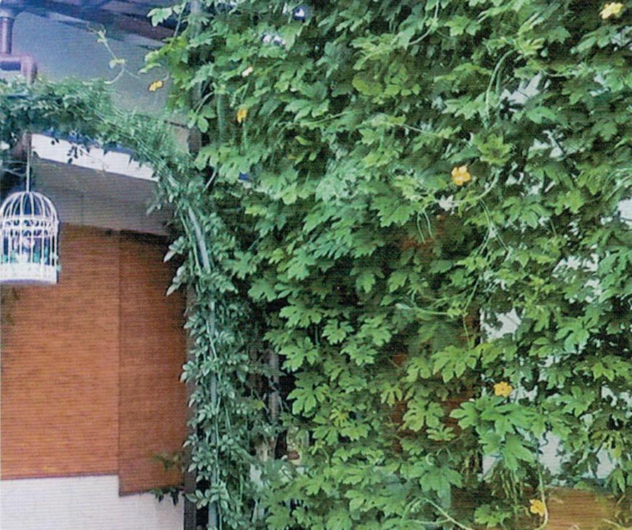 HB-101でゴーヤの緑のカーテンを作ったところ、11月初旬までゴーヤが食べられました。